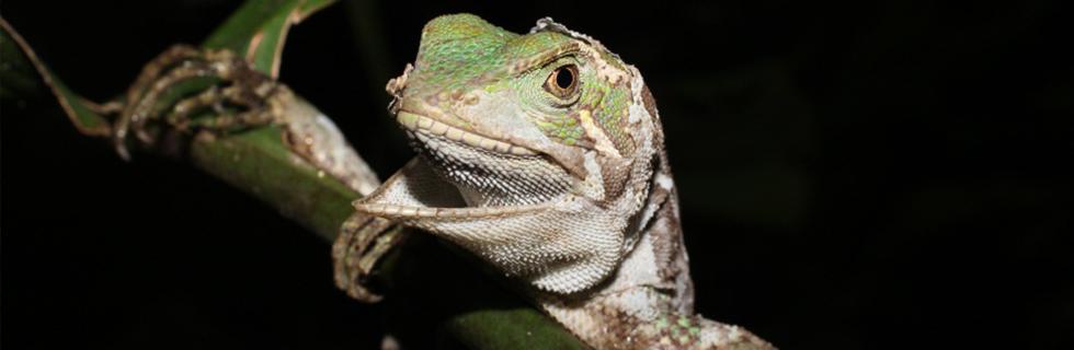 Programa de Monitoramento de Fauna e Bioindicadores