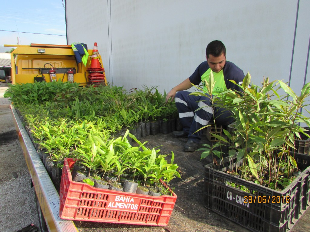 Programa de Resgate de Flora