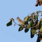 Equipe de meio ambiente da Arteris Litoral Sul realiza 23º Monitoramento de Fauna e Bioindicadores