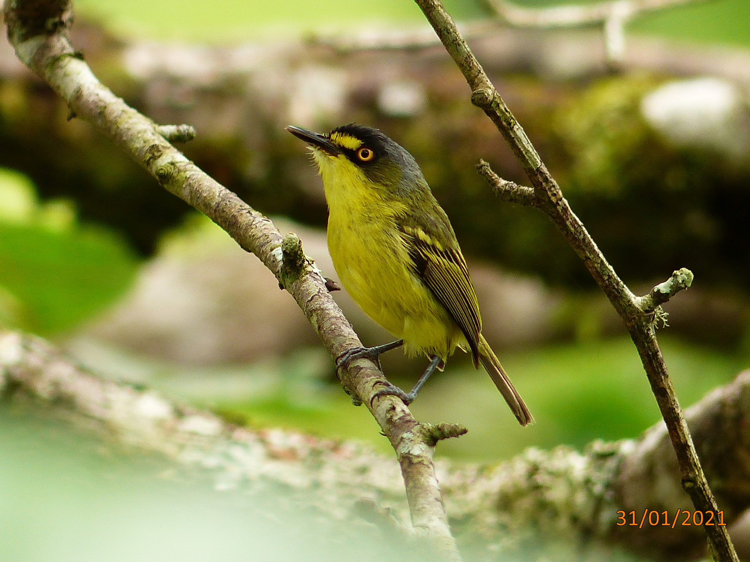 Monitoramento de fauna identifica espécies de aves no Contorno Viário